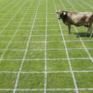 A cow is standing on a pitch with 750 fields during a cow droppings bingo in Ruswil near Lucerne