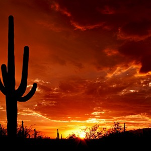 Arizona Rulings, Relief and Revised Processes