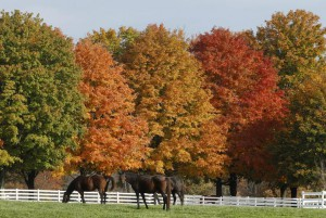 Horses graze under sunny autumn skies on Honey Acres Farm near Dickerson Maryland