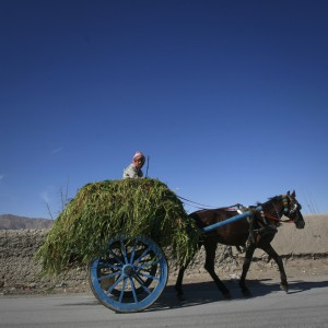 A boy transports fodder on a horse-cart through the outskirts of Quetta