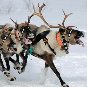 Santa's Reindeer Reveal His Eight Agile Marketing Secrets