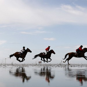 Jockeys race their horses through a puddle during the traditional horse and trotter race meeting in Duhnen on the German North Sea coast near Cuxhaven July 19, 2009. About 30,000 spectators were on hand to watch the annual event that begins as the ebbing tide exposes the mud flats on which the races are run. REUTERS/Christian Charisius (GERMANY SPORT HORSE RACING IMAGES OF THE DAY)