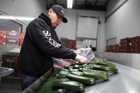 Quality Control Inspector Gilberto Nunez, 50, checks vegetables at SunFed produce packing and shipping warehouse in Nogales, Arizona, U.S., January 30, 2017. Picture taken January 30, 2017.  REUTERS/Lucy Nicholson - RTSYWBF